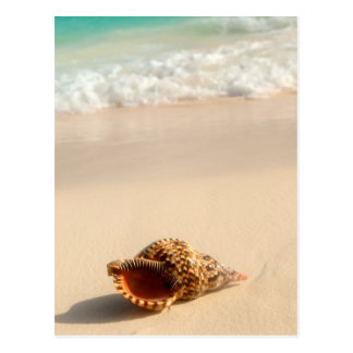 Seashell and ocean wave postcard