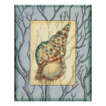 Seashell and Tree Branches Poster