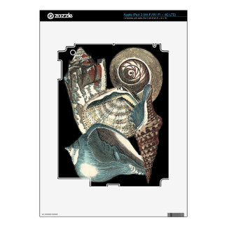 Seashell Anthology Decals For iPad 3
