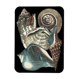 Seashell Anthology Magnet