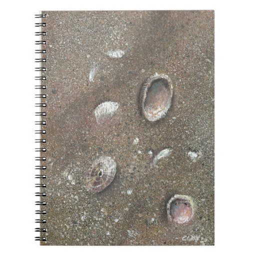 Seashell art by artist CLAY notebook