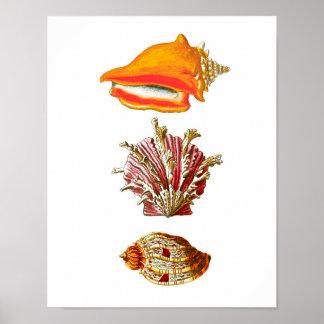 Seashell Art Print no.10 Beach Wall Decor