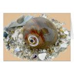 Seashell at Low Tide Coordinating Items Greeting Card