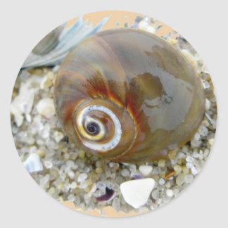 Seashell at Low Tide Coordinating Items Classic Round Sticker