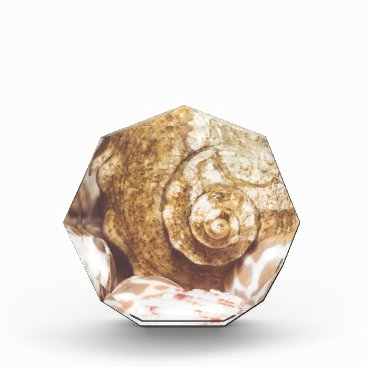 Beach Themed Seashell Background Macro Retro 2 Award