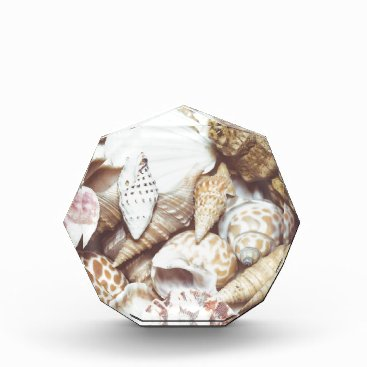 Beach Themed Seashell Background Macro Retro Award