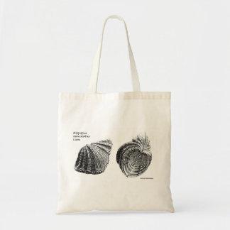 """Seashell Bag - """"Hippopus maculatus Lam"""""""