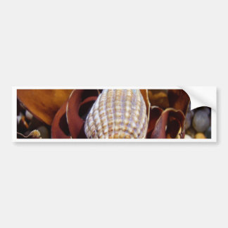 seashell beach forever beauty bumper sticker
