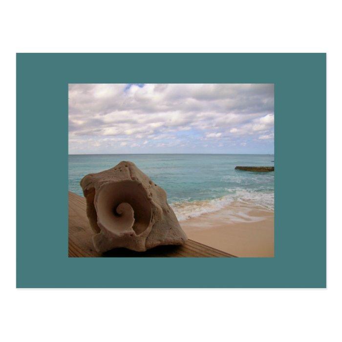 Seashell Beach Vacation Postcard