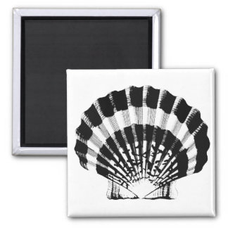 Seashell - black and white 2 inch square magnet