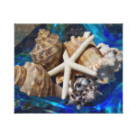 Seashell Canvas Art Stretched Canvas Print