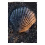 Seashell Cards