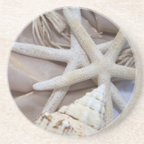 Seashell Coasters