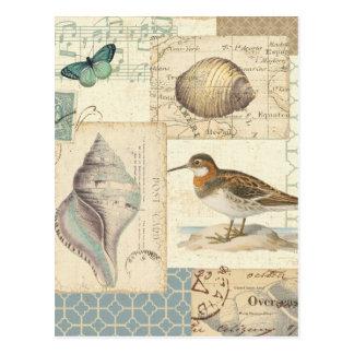 Seashell Collage Postcard