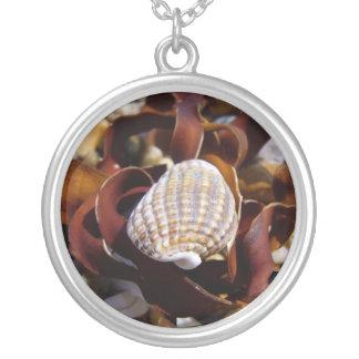 Seashell Joyerias