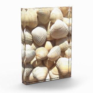 Seashell Collection Summer Beach Sunny Block Award