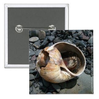 Seashell con el botón de la barra pins