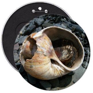 Seashell con el botón de la barra pin redondo de 6 pulgadas