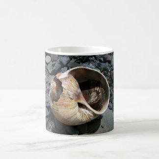 Seashell con la taza de la barra