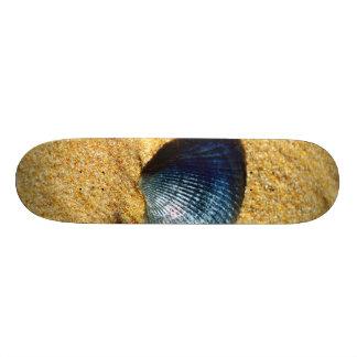 Seashell Custom Skate Board