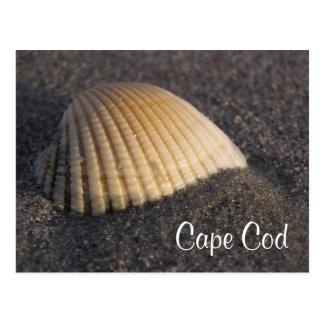 Seashell de Cape Cod en la postal de la playa