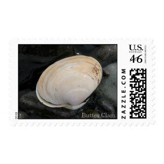 Seashell de la almeja de la mantequilla