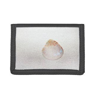 seashell de la luz de la parte posterior de la