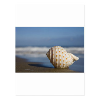Seashell de la playa postales