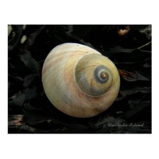 Seashell del caracol de mar de la luna, isla de tarjetas postales