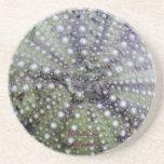 Seashell del erizo de mar posavasos manualidades