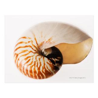 Seashell del nautilus (stenomphalus del nautilus) postales