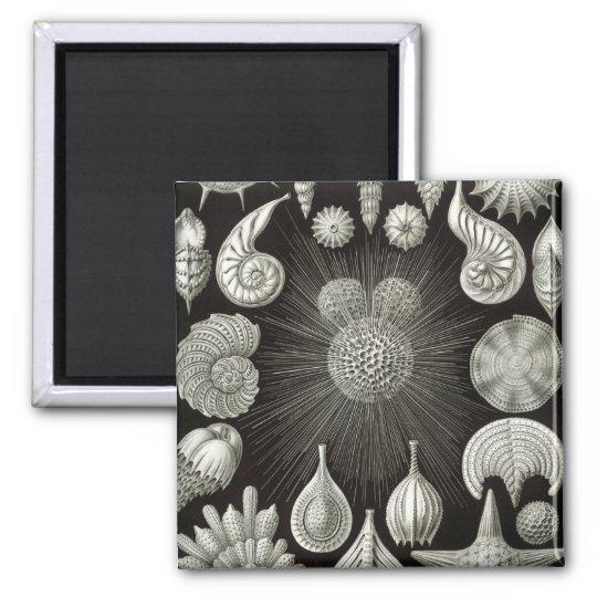 Seashell design magnet