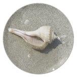 Seashell Dinner Plate