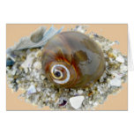 Seashell durante la bajamar que coordina artículos tarjeta