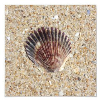 Seashell en la arena fotografía