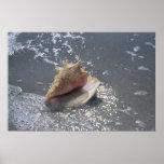 Seashell en la isla de la playa el | Sanibel, la Póster
