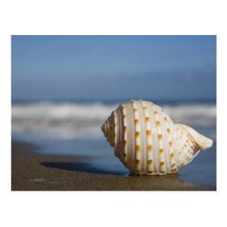 Seashell en la orilla tarjeta postal