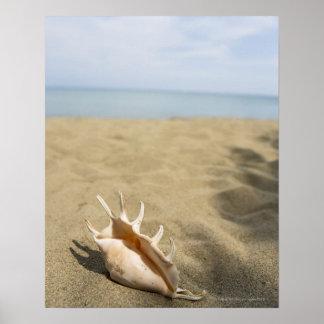 Seashell en la playa arenosa póster