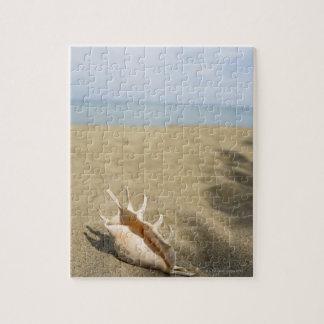 Seashell en la playa arenosa puzzles con fotos