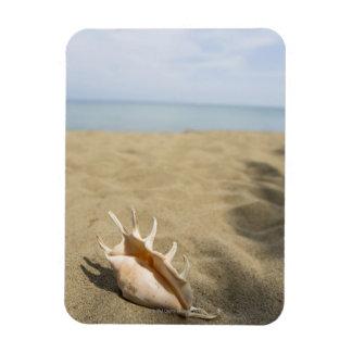 Seashell en la playa arenosa rectangle magnet
