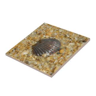 Seashell enterrado azulejo cuadrado pequeño