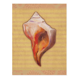 Seashell from Beach for Conch and Welk Shell Colle Postcard