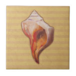 Seashell from Beach for Conch and Welk Shell Colle Ceramic Tiles
