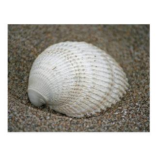 Seashell, Horsfall Beach, Oregon Postcard
