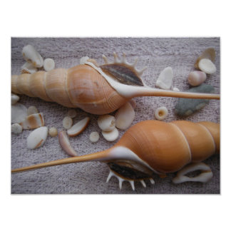 Seashell, Nautical, Beach, Summer, Custom Poster
