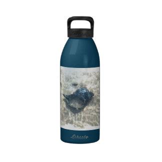 Seashell negro botella de agua