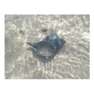 Seashell negro Onda-Lavado de la concha Tarjetas Postales