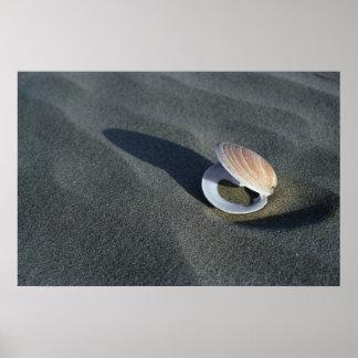 Seashell, New Zealand Poster