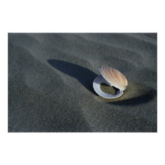 Seashell, New Zealand Posters