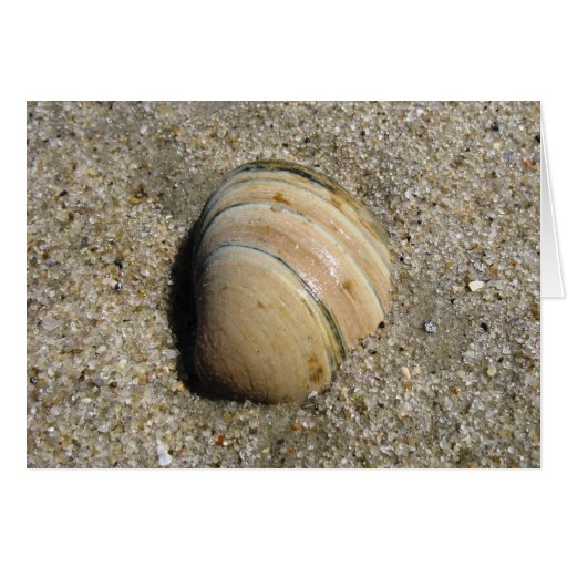 Seashell Notecard